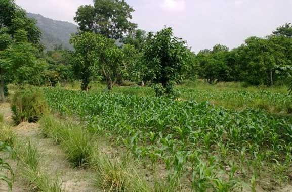 Farmer-thai